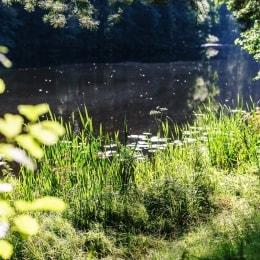 poilsis-druskininkuose-medea-spa-vaizdas-13939